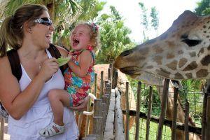 TLPZ giraffe feeding 2012